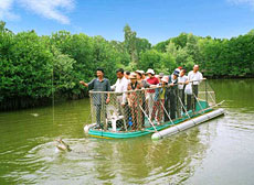 Fishing for crocodiles in Vam Sat Mangrove Forest