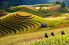 Yen Bai prepares to show off terraced fields to tourists